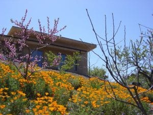 Elfin Forest Qigong Studio in Spring